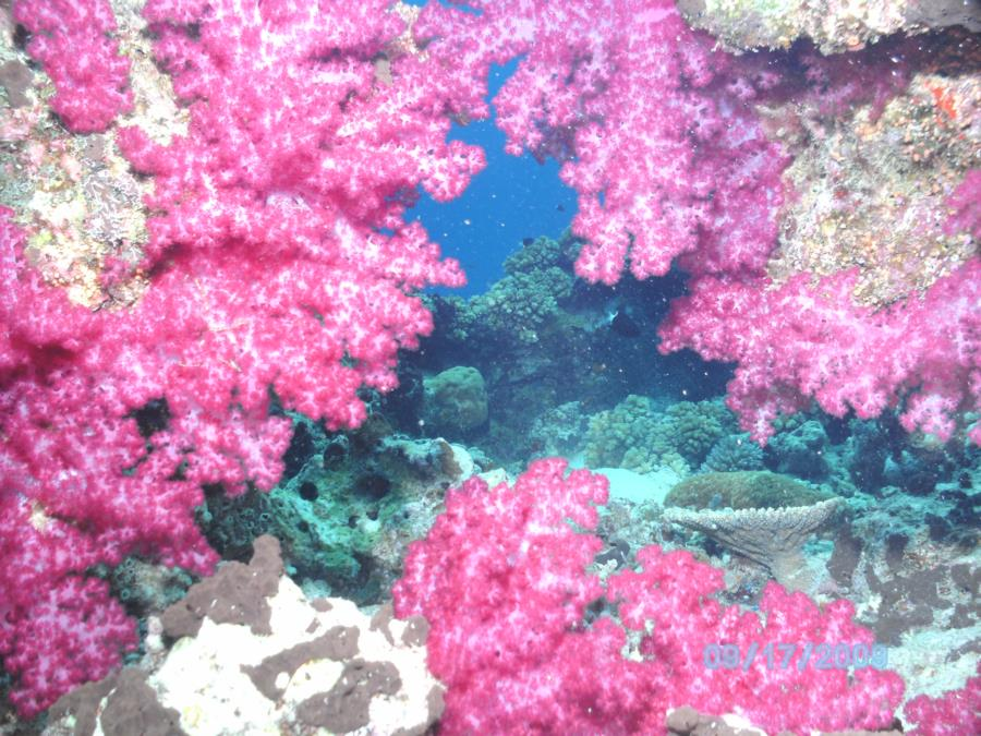 Soft Coral, Fiji