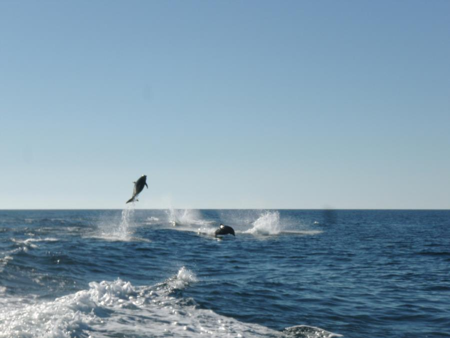 Big Air for this Dolphin!