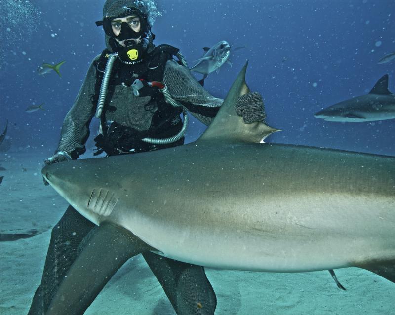 Shark Feeding in Grand Bahamas