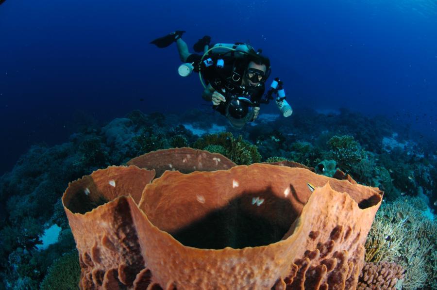 Tubbataha Reef - May 2012 - Sula Sea