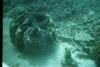 Great Barrier Reef 2003