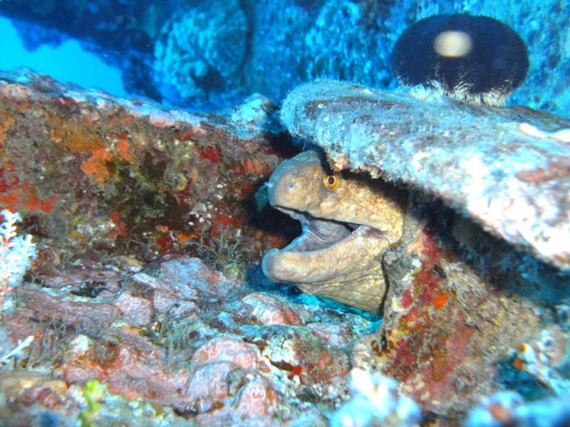 Eel Black Rock Arches