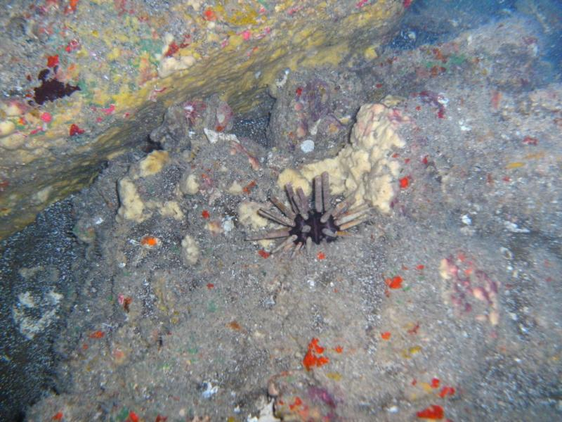 Urchin or Sea Mine??