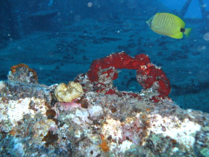 On the Sea Tiger (Oahu, HI)