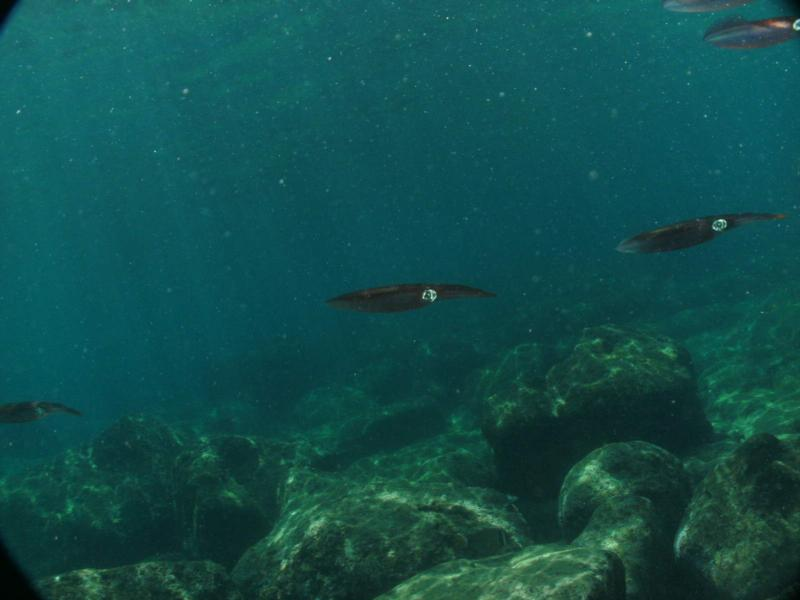 Squid Sharks Cove