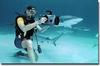 Shark dive in the Bahamas.