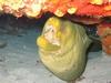 10` (seriously) Green Morey at 65` on La Francesca reef. No Zoom