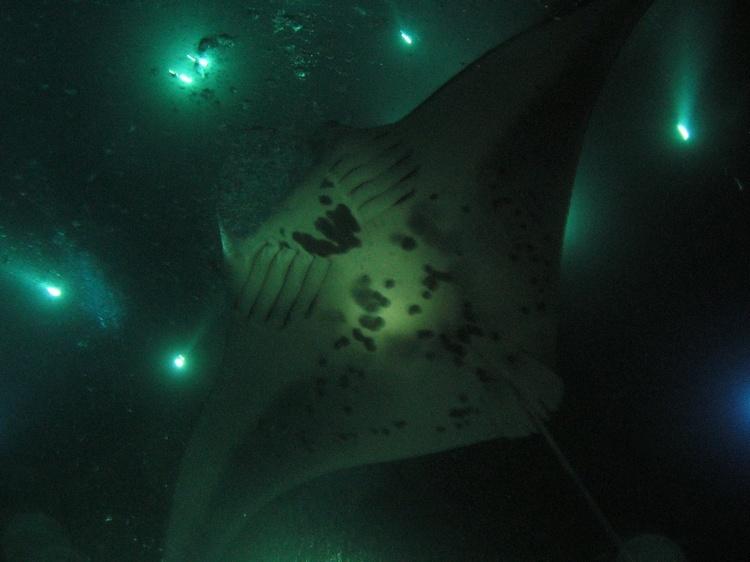 Manta Rays night dive  ( Yap )