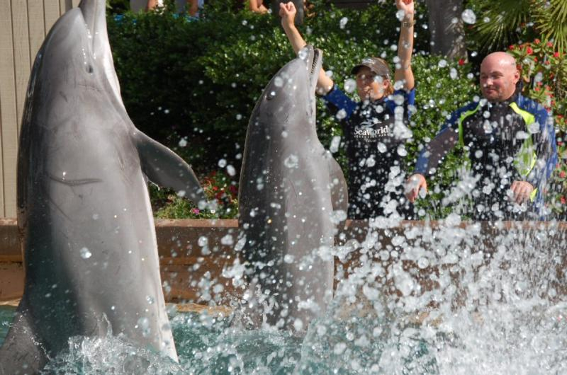 Part of the act at Dolphin Cove. SeaWorld, Orlando