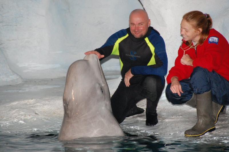 Beluga whale interaction. SeaWorld, Orlando