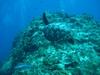 Cozumel Jan 2008 - Columbia Deep - Hawksbill turtle
