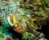 toad fish