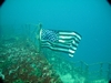 Flag at Speigel Grove... AWESOME dive!!