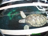 Save the Turtles South Padre Island