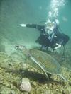 sea turtle in San Carlos