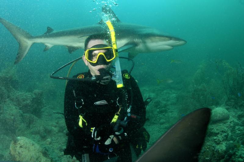 Standard Bahamas shark feeding pic
