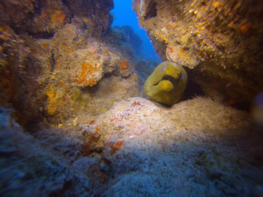 Cool Green Moray Eel