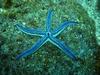 Starfish Galapagos