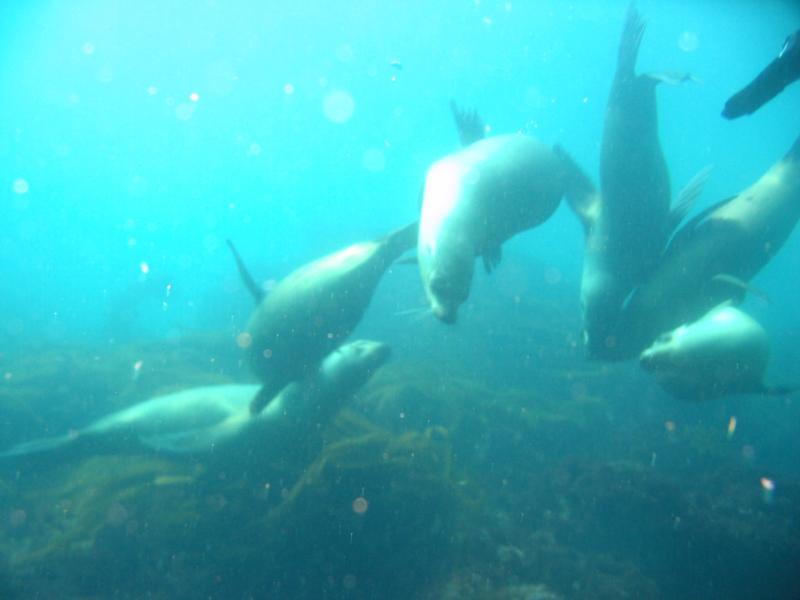 Sea Lions Coronado Islands