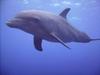 Dolphin Encounter Curacao 12/07