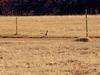 pet roadrunner