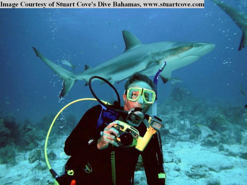 Reef Shark behind me