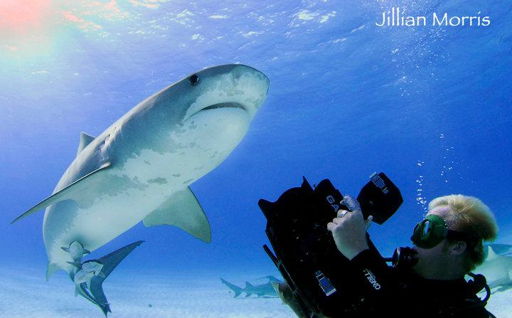 Duncan filming a tiger shark