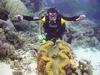 Studying Sea Creatures, Great Barrier Reef, Australia