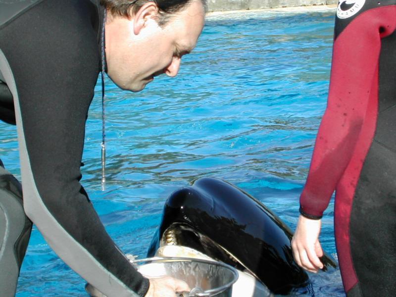 Me feeding the Orca