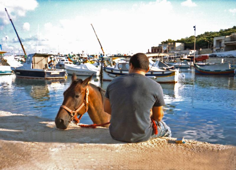 Horse - The Mgarr Harbour (Gozo 2006)