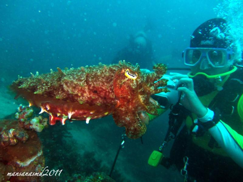 the cuttlefish and me