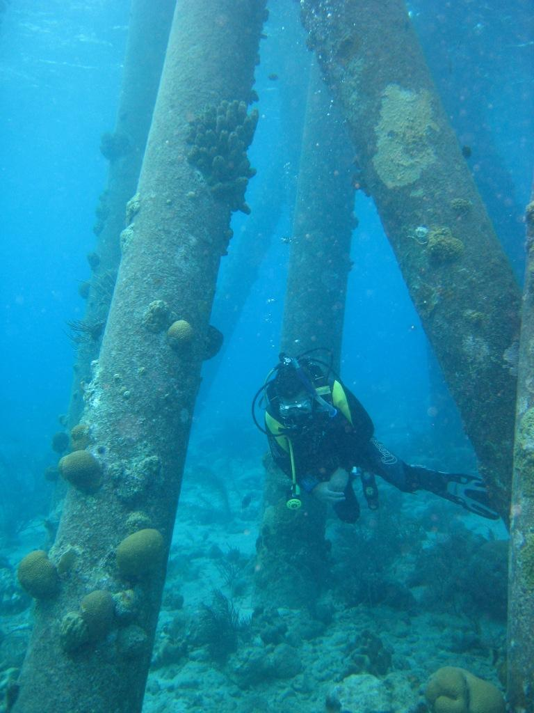 The pilings of Salt Pier Bonaire