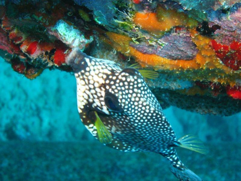 Trunk fish on Bonaire