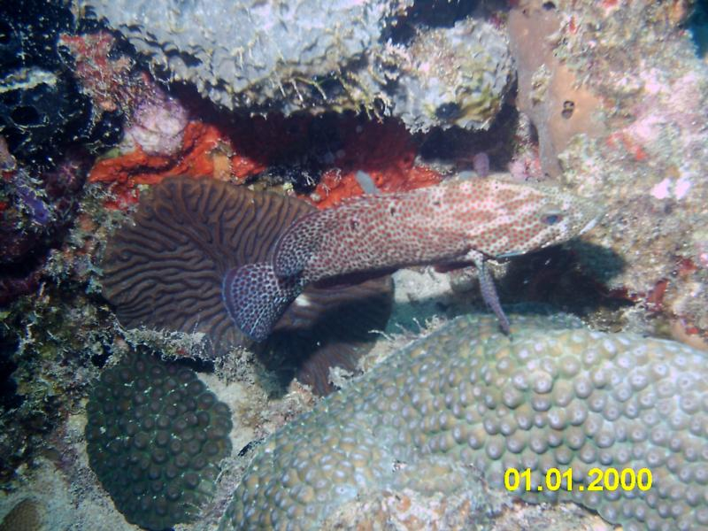 lil grouper