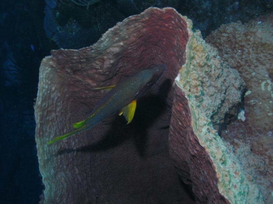 Cayman Islands 2012