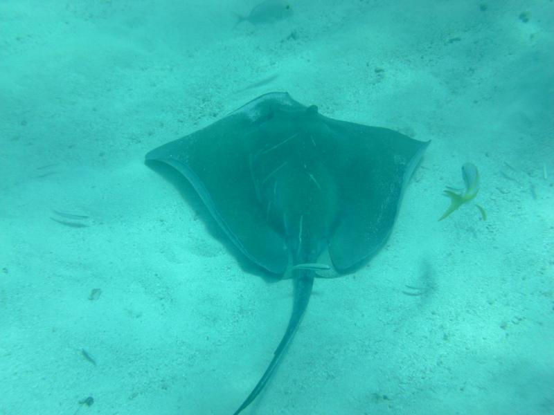 Stingray - Marathon Key, FL