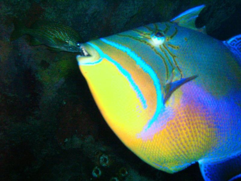 Parrotfish - New England Aquarium