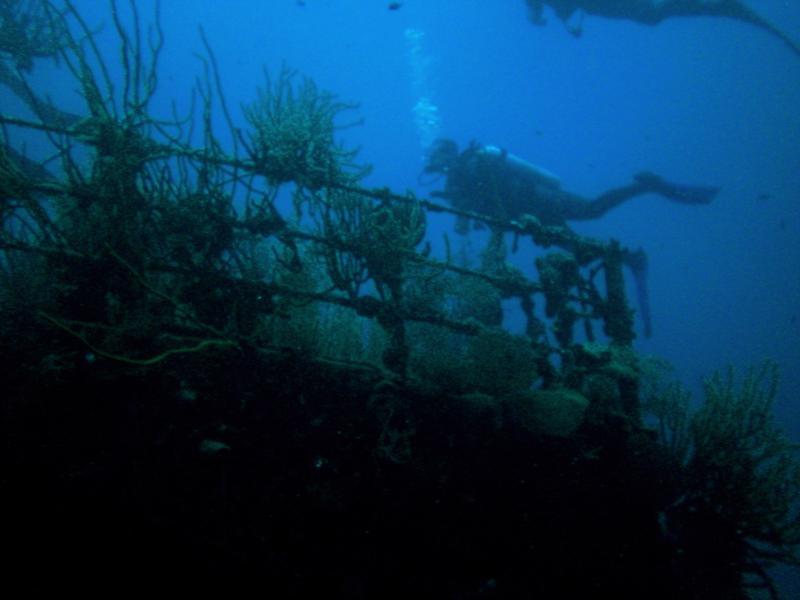Wreck of the Prince Albert (Roatan, Honduras)