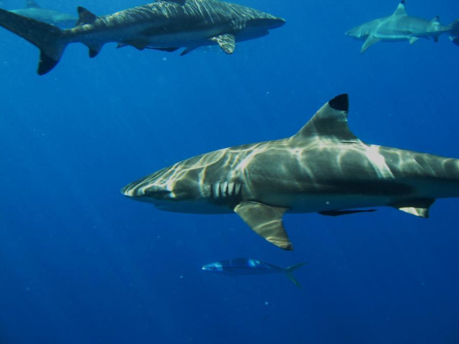 Sunbathing Sharks