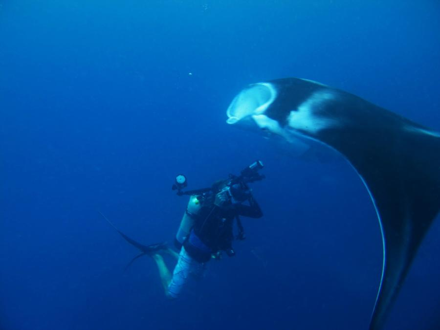 Diver taking a picture of a Manta