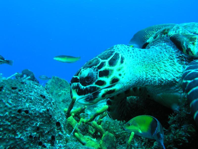 yucab reef cozumel