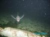 a solo ratfish