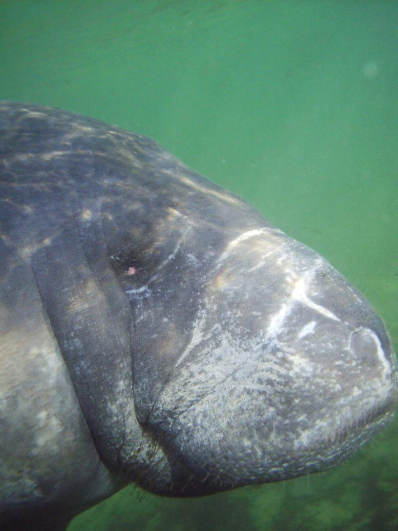 What a (Manatee) face.....