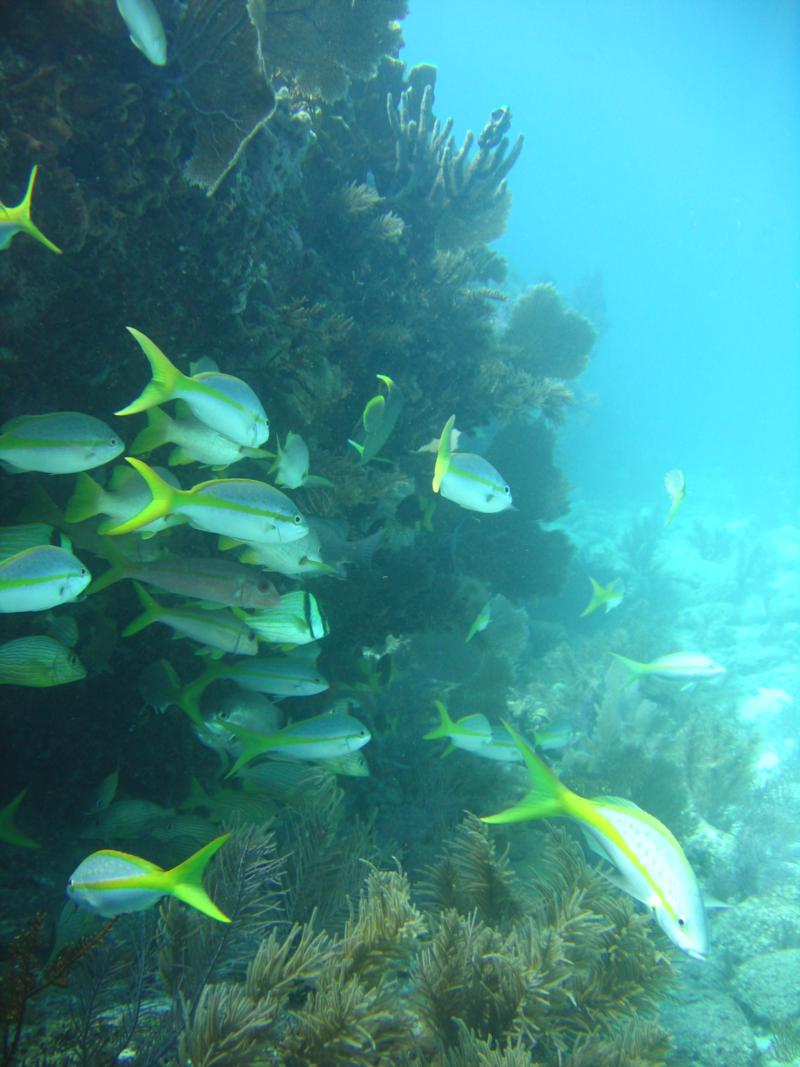 Molassas Reef- Key Largo, Florida