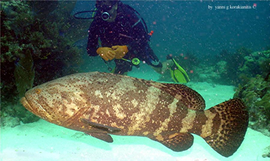 Kwolf & Grouper @ Molasses Reef, Key Largo
