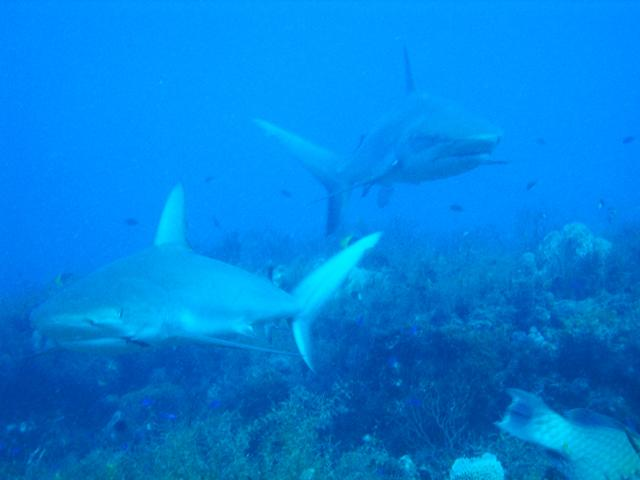 Shark Canyon, West Palm