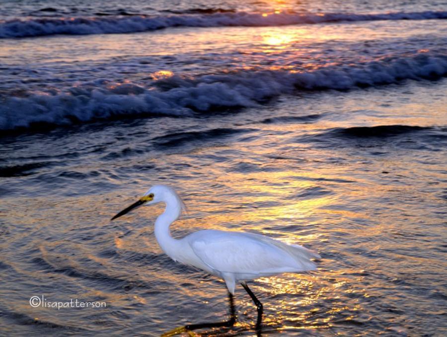 Panama City Beach FL