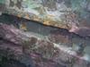 Toadfish - Suloide - NC