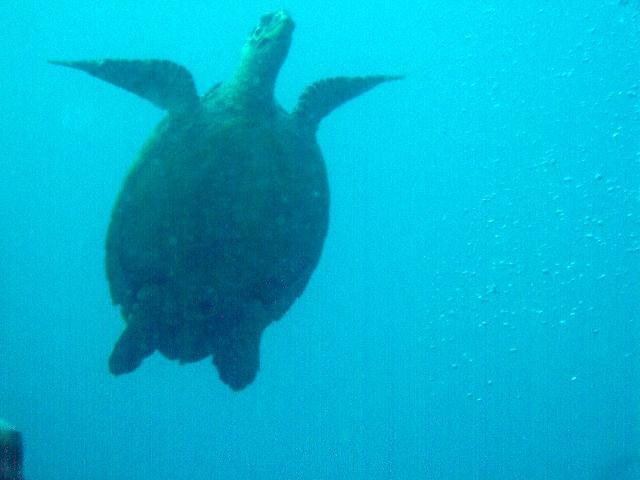 friendly turtles