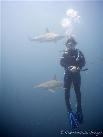Shark Dive Aliwal Shoal South Africa